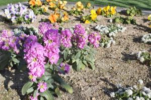 花壇にはいつも花が。